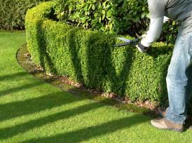 Création de Jardin Viroflay